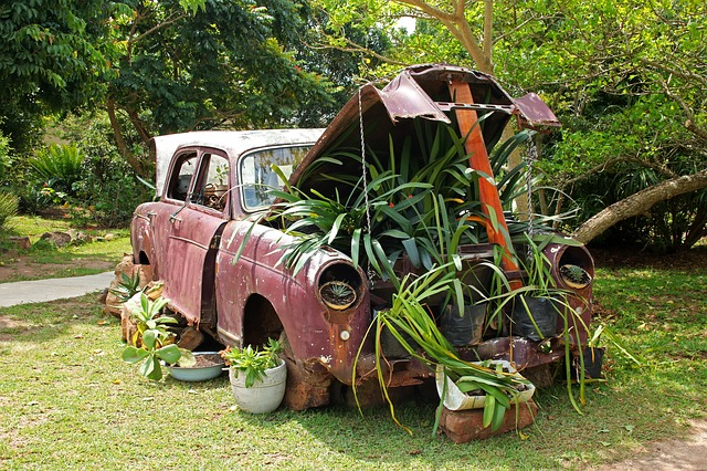 An old car repurposed for growing garden plants